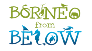Borneo from Below logo