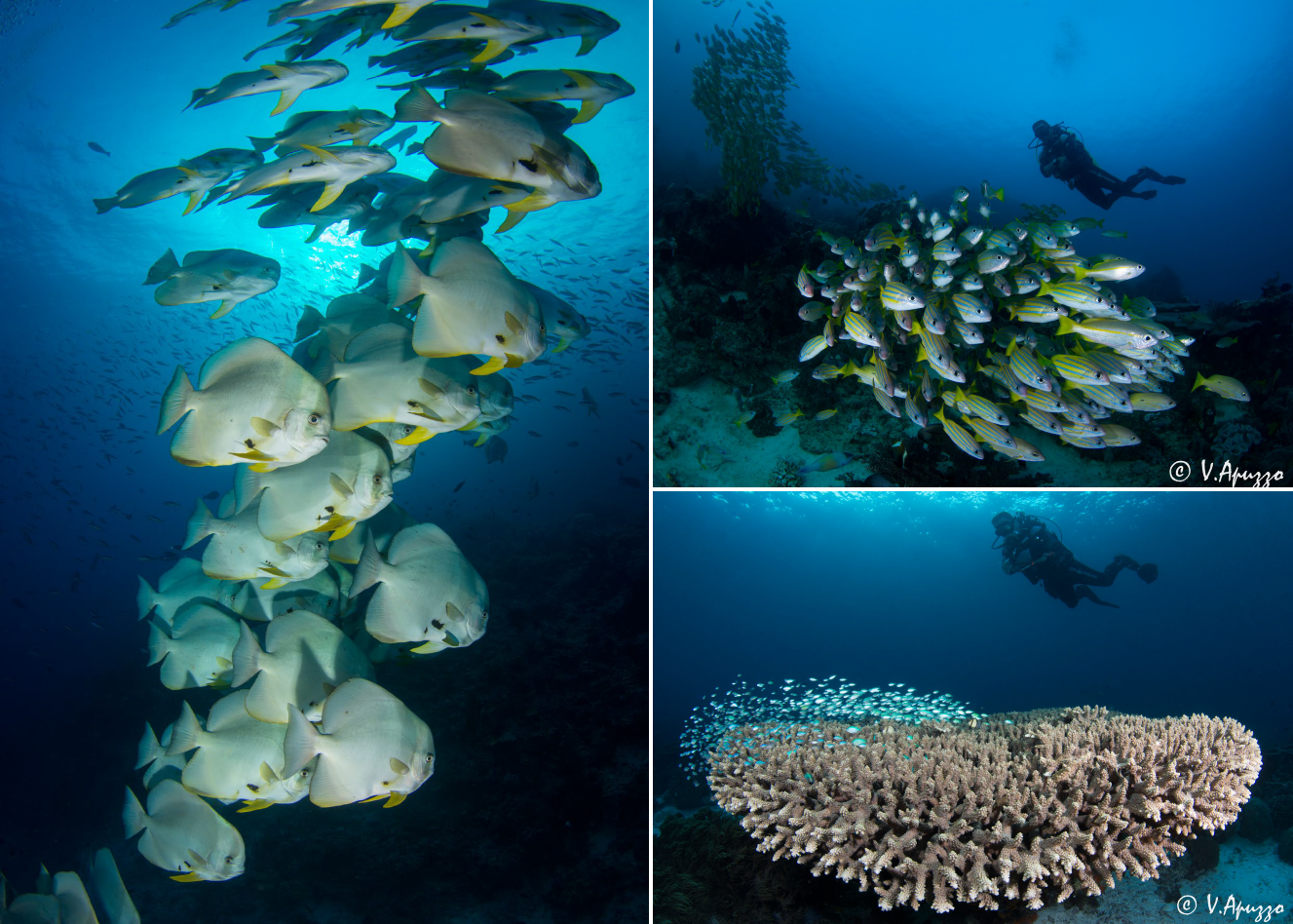 Diving and underwater photography in Papua Raja Ampat