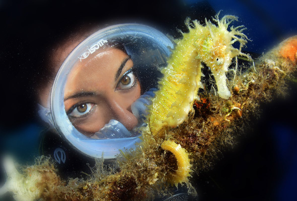 Seahorse Mythology Science And Danger Of Extinction Scubashooters