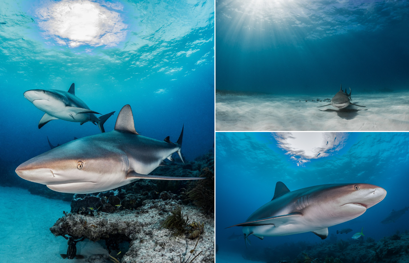 Tips for unique sharks underwater photos