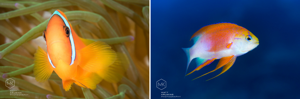 Underwater critters and environment preservation
