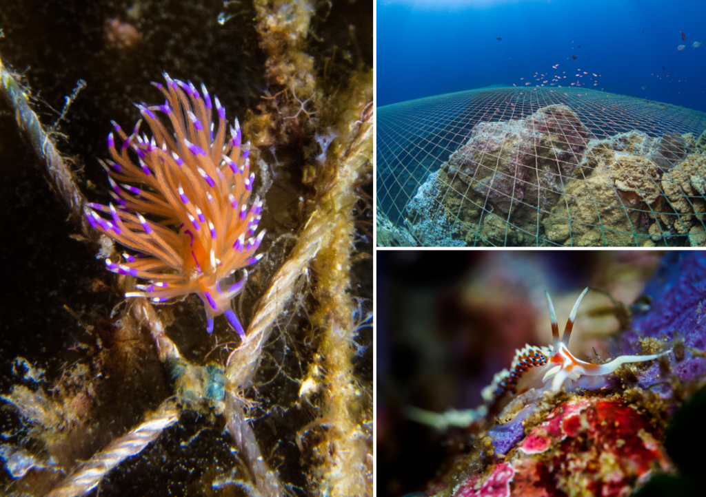 Nudibranch and nets in Samran Pinnacle - Gulf of Thailand