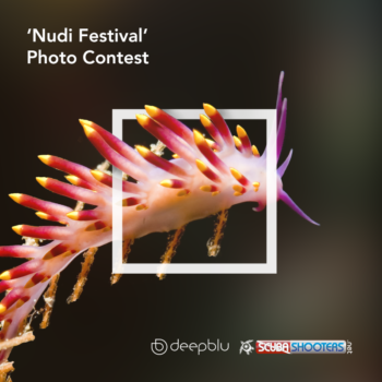 Deepblu nudibranch contest 2017