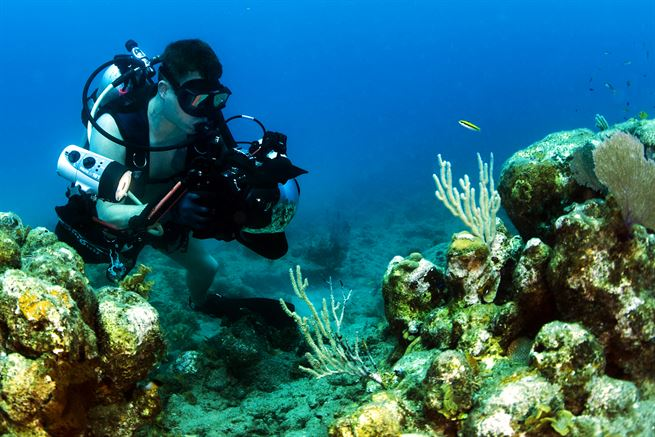 underwater photography guide for beginners