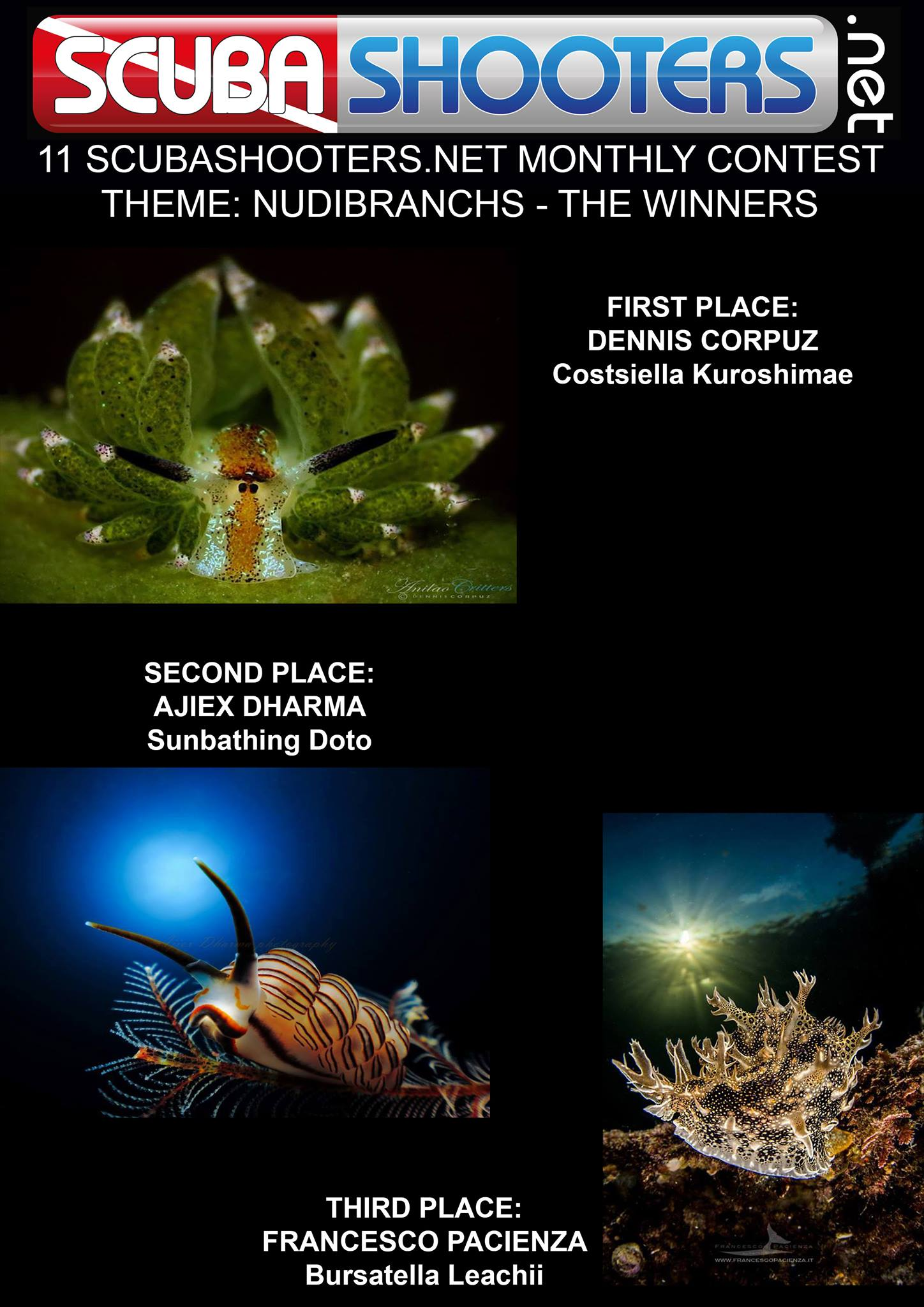 Contest 11th Monthly Contest - Nudibranches