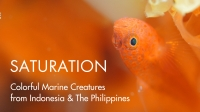 SATURATION - Colorful Marine Creatures from Indonesia & The Philippines |