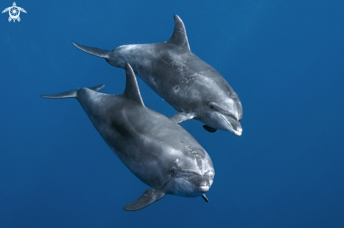 A dolphins