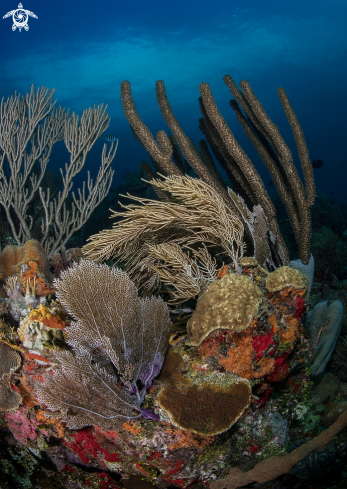 A Variety of Hard and Soft Corals