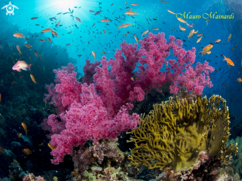 A Red Sea reef
