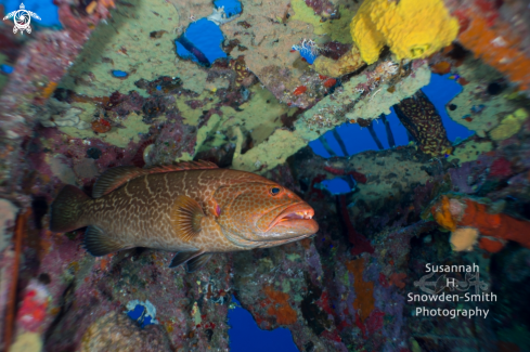 A 28mm lens and grouper
