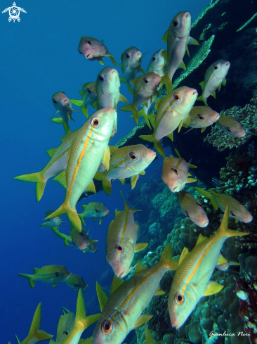 A Reef fishes
