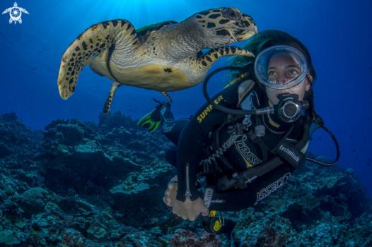 Diver & Turtle by Sergio Riccardo