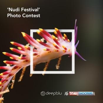 Deepblu nudibranch contest 2017