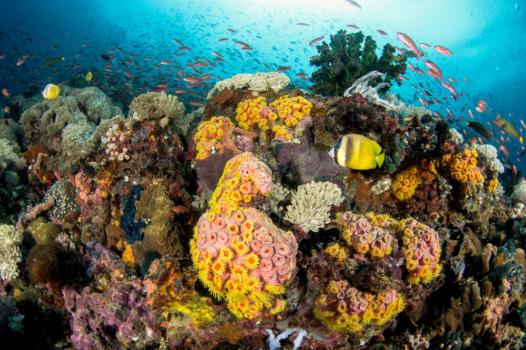 Underwater Philippines Panorama